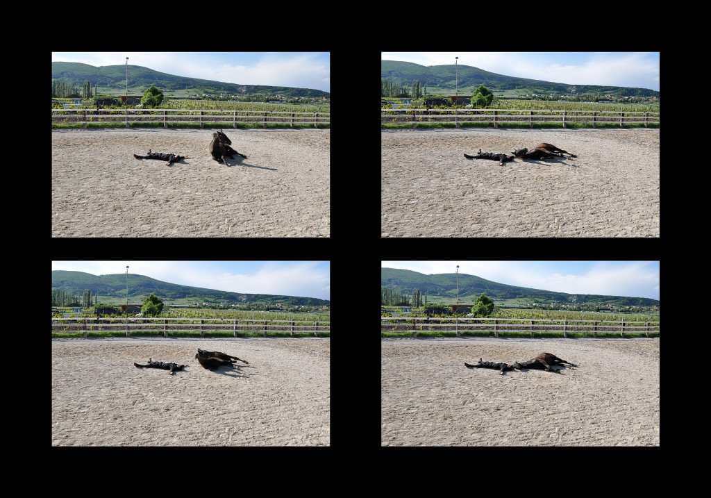 FEIGNING DEATH HORSE AND HORSEMAN | SEQUENCE, 2013